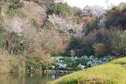 恩賜池の春の景色