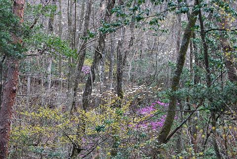 花が賑やかな雑木林