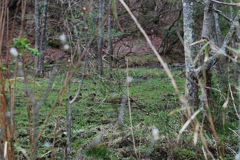 湿地が広がる