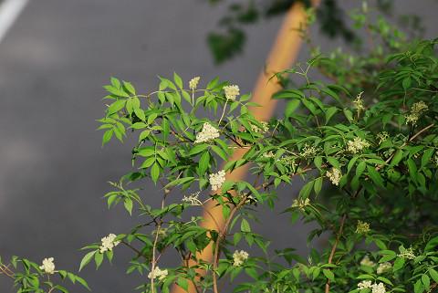 この木の花は何?