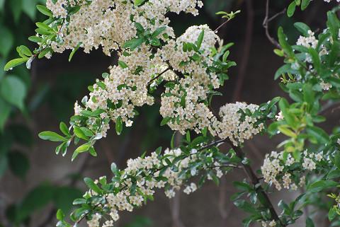 白い花は何2