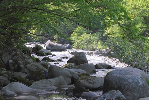 矢作川の渓流の風景