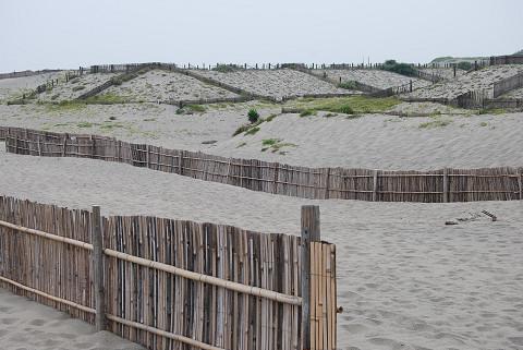 砂丘の堆砂垣