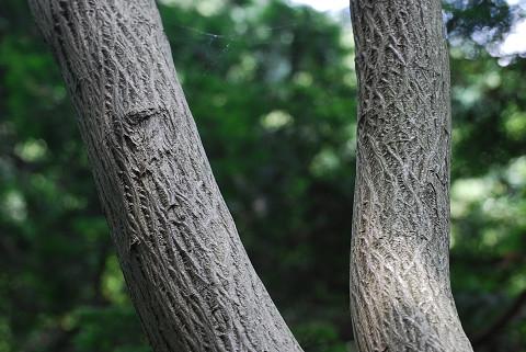 木肌がきれいな木が
