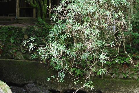 この植物(樹木)は?