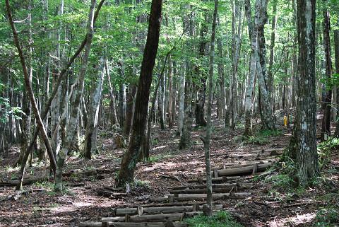 面の木原生林を
