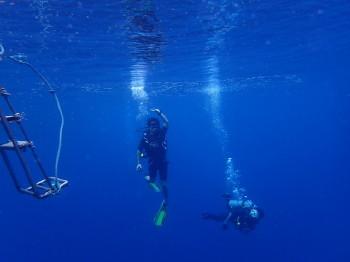 tao_diving_091014