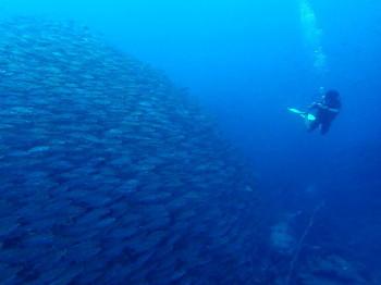tao_diving_091014_1