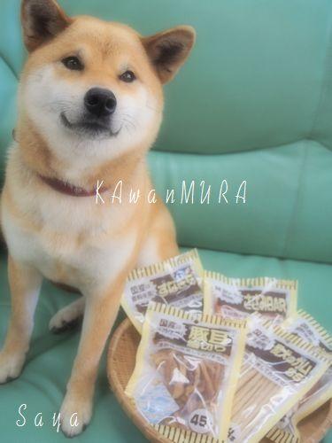 カワムラ:モデル8月