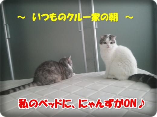 DSC_1115-001.jpg
