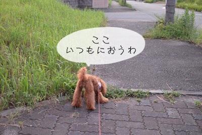 RDSC_2339_R.jpg