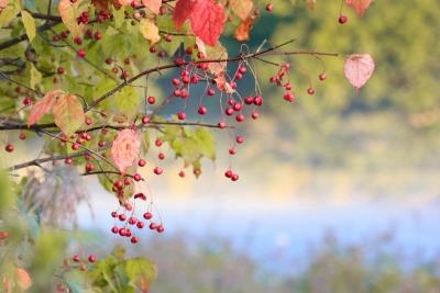 秋の実り-8317