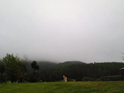 10月の霧6
