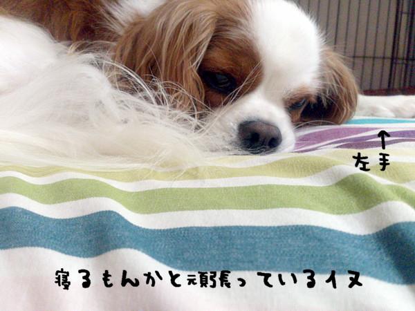DSC_1008_2014100600032025d.jpg