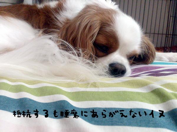 DSC_1009_20141006000322e5e.jpg