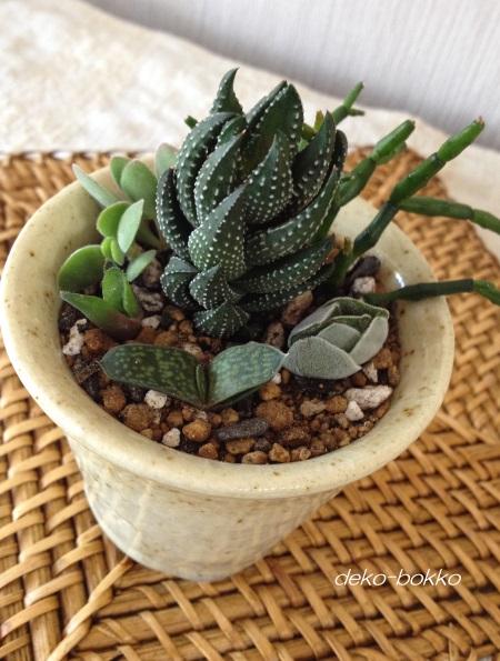 手作り鉢に寄せ植え