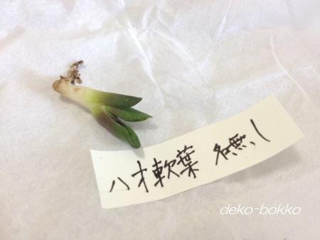 ハオ軟葉 ゆぽぽ産 201409