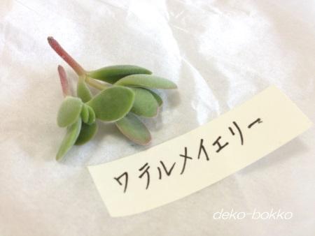 ワテルメイエリー ゆぽぽ産 201409