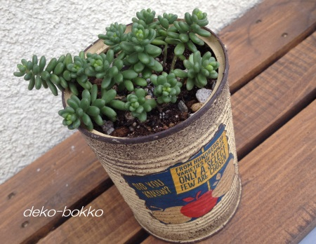 斑入りタイトゴメ 植え替え リメ缶 201409