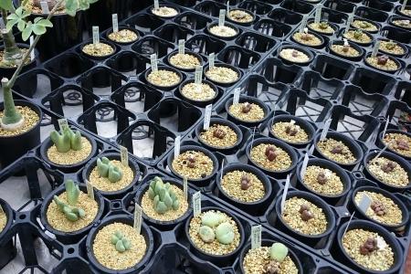 秋のサボテン・多肉植物フェア