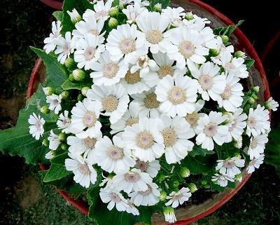 flower_2014_1010_2.jpg