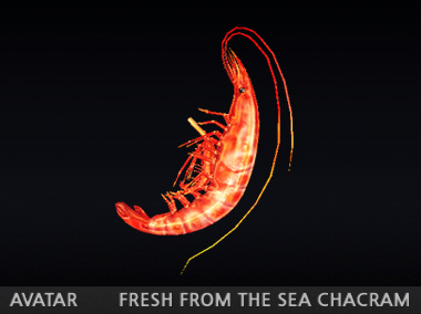 2014_0807_fresh from the sea_chacram_preview