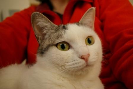 うちの猫写真 208