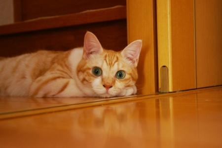 うちの猫写真 375