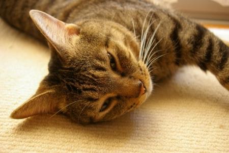 うちの猫写真 377