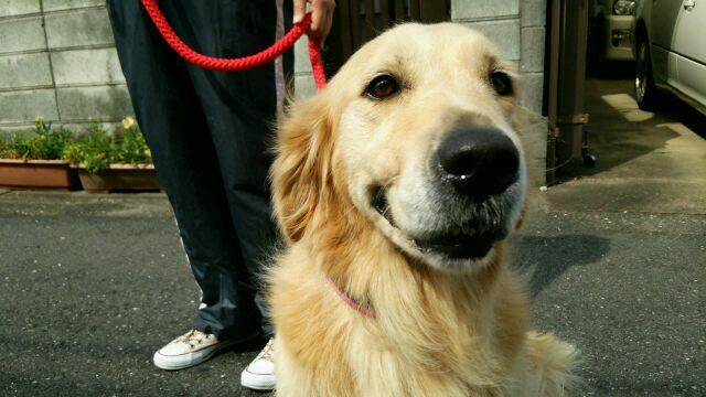 O Dog Hairstyle: Dog Style Dogstyle