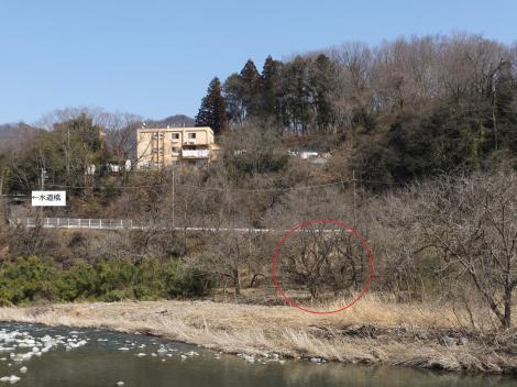 道志川左岸から水道橋を望む
