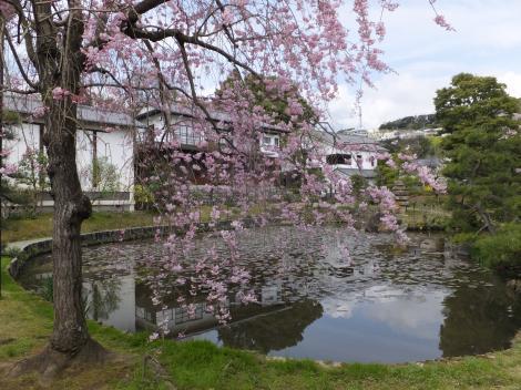 松永記念館・しだれ桜