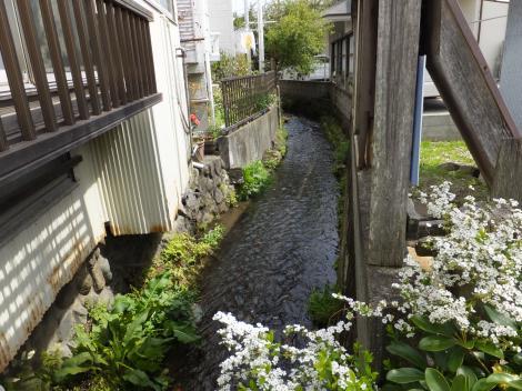 小田原用水・板橋見附信号付近