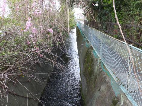 川音川右岸付近の松田用水路