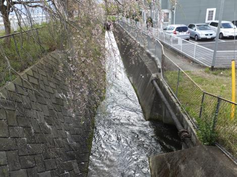 川音川サイフォンの先を流下する松田用水