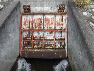 酒匂川左岸の放流口・フラップゲート