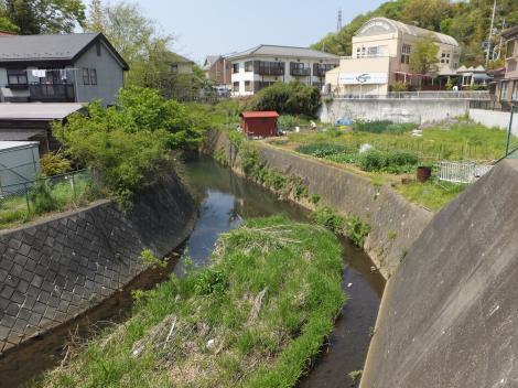 鶴見川・図師大橋より上流を見る
