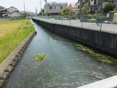 金田堰(用水路)