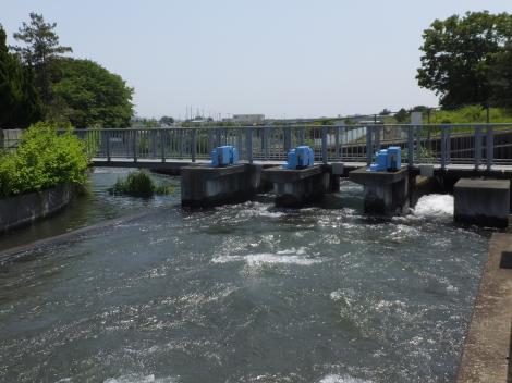 酒匂川左岸幹線用水路・鬼柳分水堰