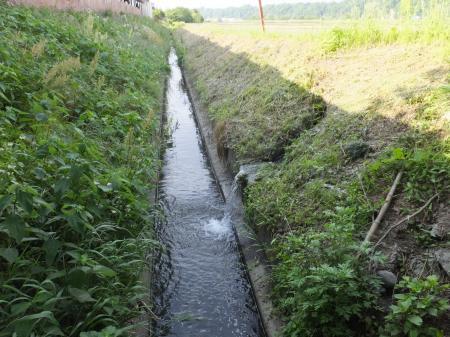 葉山島の田んぼの余水排水放流口