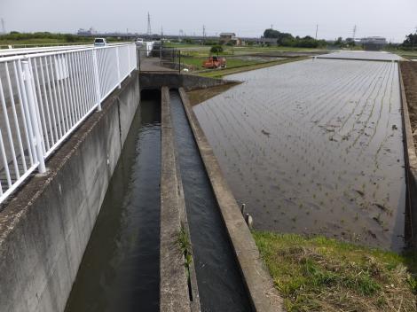 酒匂堰・千代橋下流の支線用水路
