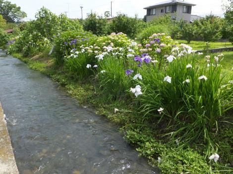 五ヶ村排水路・小田原市栢山