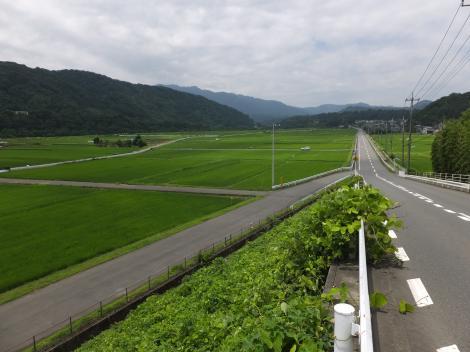 仙台下の田んぼ