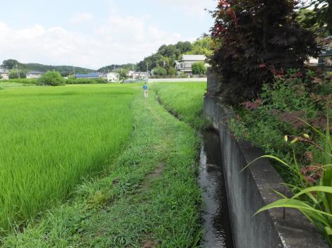 桜ヶ谷堰用水路
