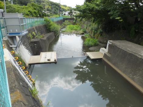 鶴見川・桜ヶ谷堰