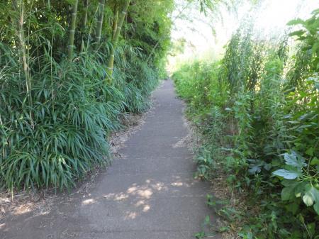 四ツ谷地区野水路