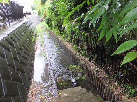 大杉の池直下の水路(八瀬川源流)
