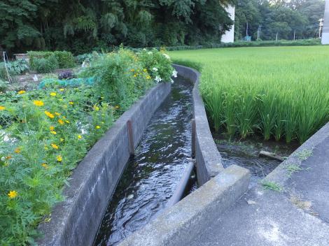 仙台下用水路・中津大橋北側