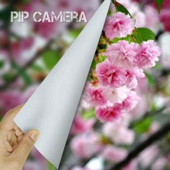 松前琴糸桜B