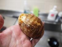 里芋と蓮根の照り焼き風22